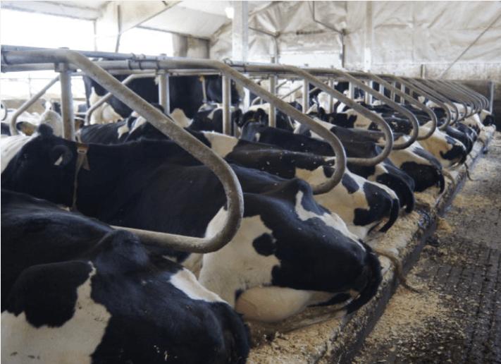 pasture mat